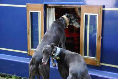 What are you after Henry and Archie? You know that's not the way onto the boat....