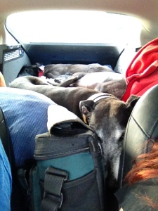 The hounds enjoyed the long car ride home - they finally got some proper snoozing time :-)