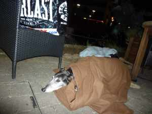 All wrapped up - the Kings Retreat in Sale is a nice pub but it was chilly for al fresco dining...