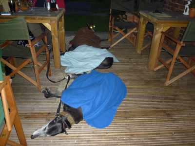 The three greyhounds at the  greyhounds pub - they were very comfy and didn't welcome their celebrity status!