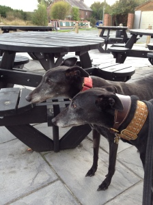 Ollie and Herbie are old hands at this pub business :-)