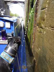 Mind your nose Archie - always worth shutting the side hatches when locking down - a lot of locks leak :-)