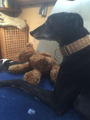 "Herbie ""looking after"" his new teddy..."