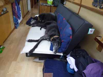Tired puppies - and this was before we started the day's cruising :-)