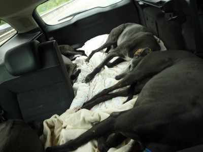 There's never any trouble getting the hounds into the car at the end of a trip - it's their big chance to catch up on their sleep :-)