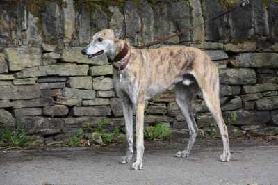 This fine fellow passed us today - we didn't catch his racing name but he's very beautiful :-)
