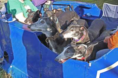 You can't have too any happy greyhound photos :-)