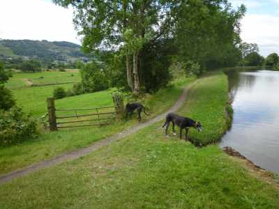Good rummaging country here - of ocurse, Archie and Henry have wee'd here before on nb Greyhound :-)