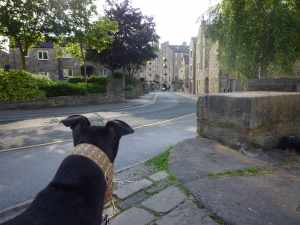 Herbie exploring Skipton - a bit more than we wanted really :-p