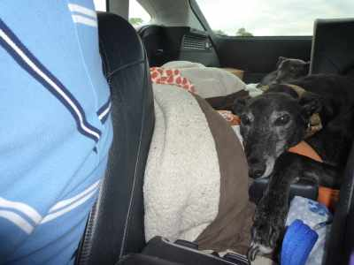 Tired puppy - his illicit and impromptu run through Skipton a few days ago wore him out!
