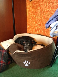 It took time for Ty to trust new things - even beds! But once he saw that he could hide in this one AND watch the kitchen, he was happy..