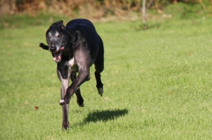 Ty zooming at home - he's surrounded by his pals but he'd outrun them here :-)