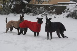 Lou, Lynx and Ty - bonding in their first winter together..