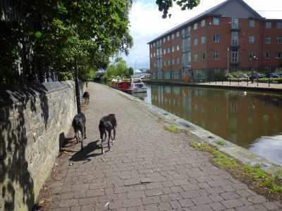 """Free Beanz rummagin' - uh Dadi Richard, did you heer mumi Sue say sumfink about """"don't you let those dogs off lead in the city..."""". No? Me neiver!"""