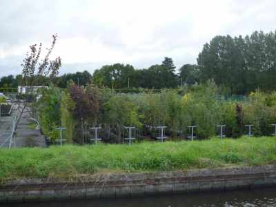 We liked the look of this tree nursery - just as well we're frd frm home or we'd hae been in there stocking up with new trees for the orchard...
