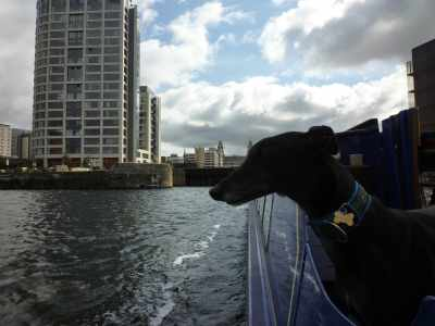 Archie, I'm trying to get a photo of the famous Liver Building...D'h mummy Sue, Iz way more famus than sum old buildin'...