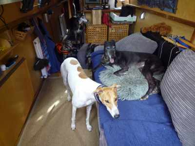 New Indigo Dreamers - Mikey and Mishka, who live on a beautiful widebeam at Limehouse Marina :-)