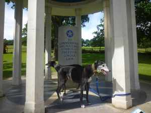 The Beanz at the Magna Carta memorial - does it have a clause enrusing the sausage rights of greyhounds?
