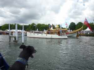 Archie inspecting rowbarge Gloriana - I wonder whether it has space for a greyhound - or maybe its just for royal corgis!