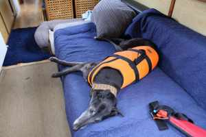 Herbie was none too impressed with hiis life-jacket - he had no intention of leaving his sofa - even if the boat sank!