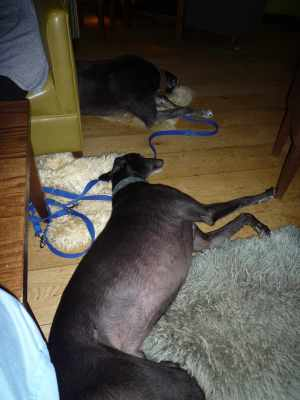 Pub hounds - they always behave impeccably - even more so when they're exhausted!