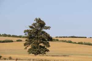 Tree.....