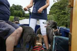 Nicci learning to drive - the greyhounds are helping...